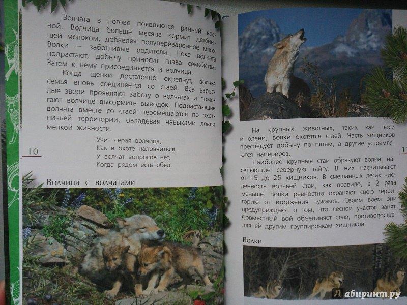 Иллюстрация 13 из 21 для Лесные тайны - Александр Тихонов | Лабиринт - книги. Источник: Melaschka