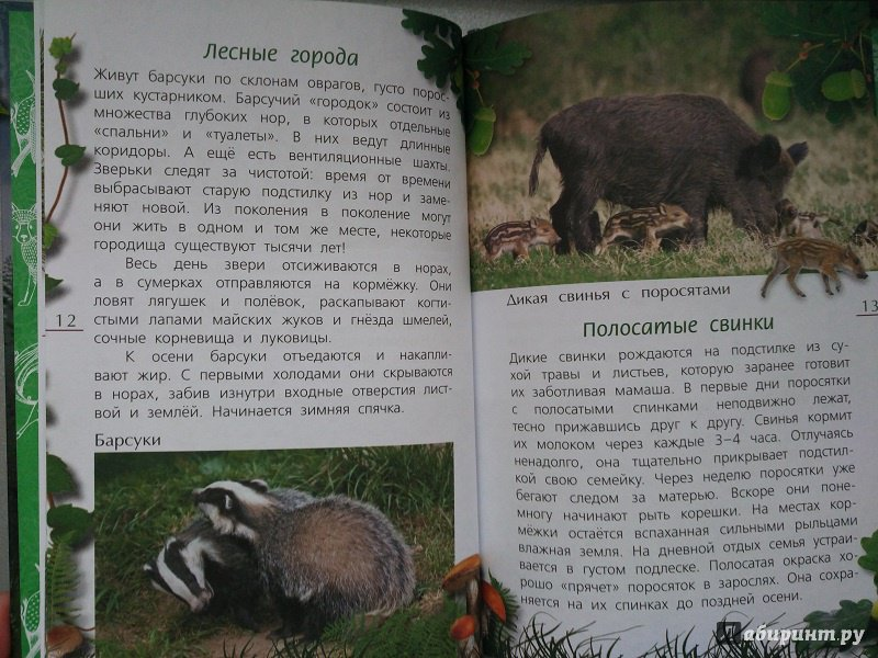 Иллюстрация 14 из 21 для Лесные тайны - Александр Тихонов | Лабиринт - книги. Источник: Melaschka