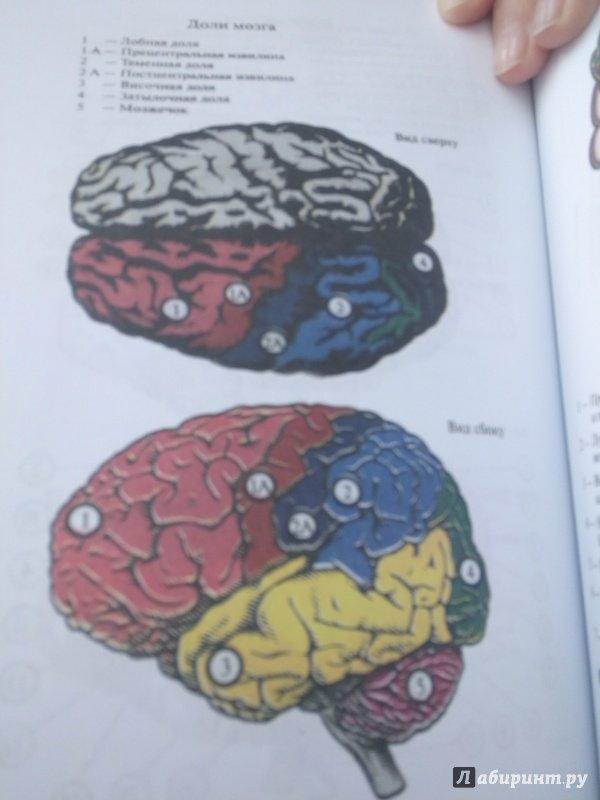 Иллюстрация 19 из 34 для Основы нейропсихологии. Учебник для ВУЗов - Татьяна Визель | Лабиринт - книги. Источник: Тишина Юлия