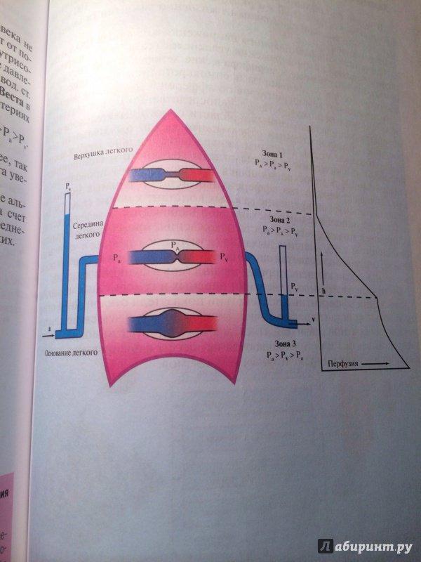 Схема вагин фото — photo 12