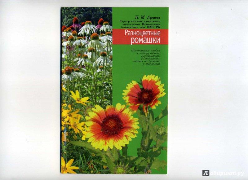 Иллюстрация 1 из 5 для Разноцветные ромашки - Наталья Лунина   Лабиринт - книги. Источник: Ирина