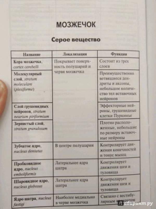 Калмин о. В. Анатомия человека в таблицах и схемах.