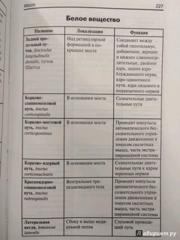 Анатомия человека в таблицах и схемах. Учебное пособие.