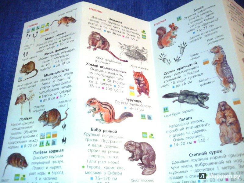 Иллюстрация 16 из 18 для Животные. Определитель для малышей | Лабиринт - книги. Источник: Ivi