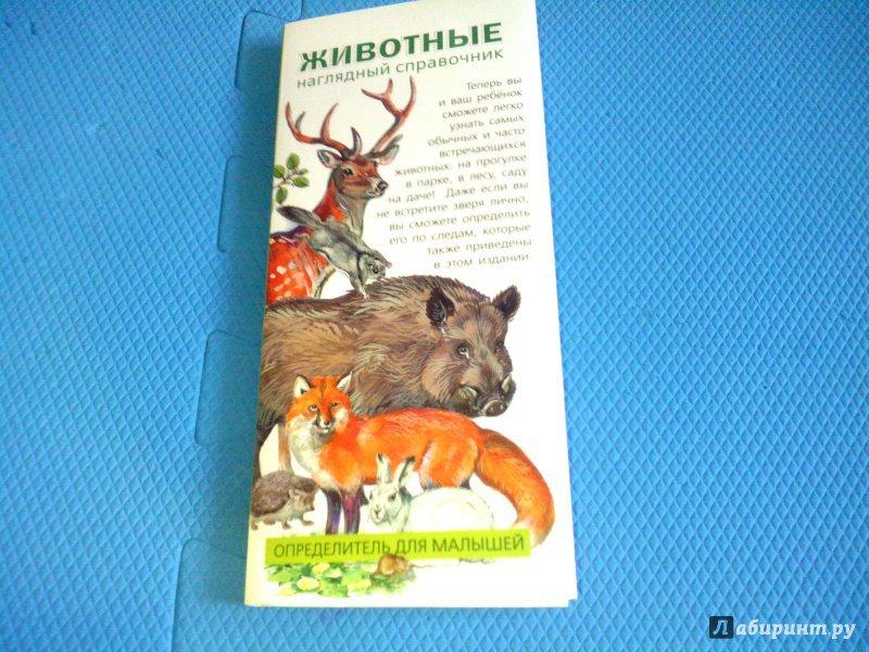 Иллюстрация 12 из 18 для Животные. Определитель для малышей | Лабиринт - книги. Источник: Ivi