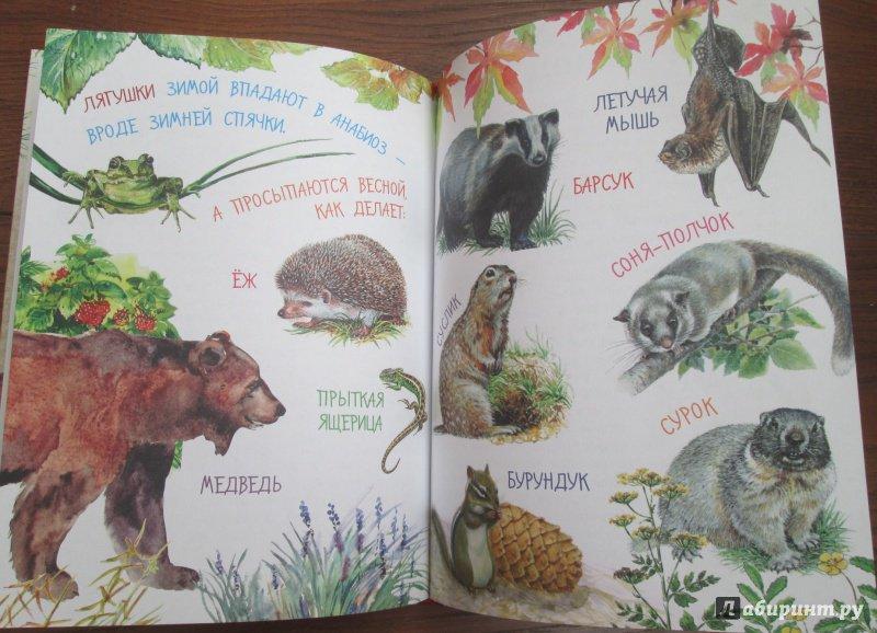Иллюстрация 30 из 61 для Рассказы о природе - Михаил Пришвин | Лабиринт - книги. Источник: iliri
