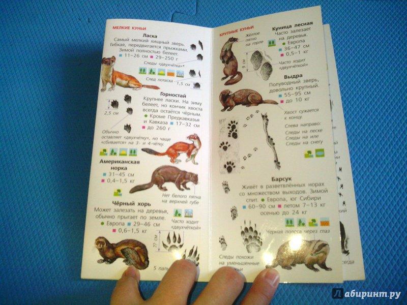 Иллюстрация 15 из 18 для Животные. Определитель для малышей | Лабиринт - книги. Источник: Ivi