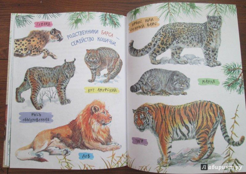 Иллюстрация 33 из 62 для Рассказы о природе - Михаил Пришвин   Лабиринт - книги. Источник: iliri