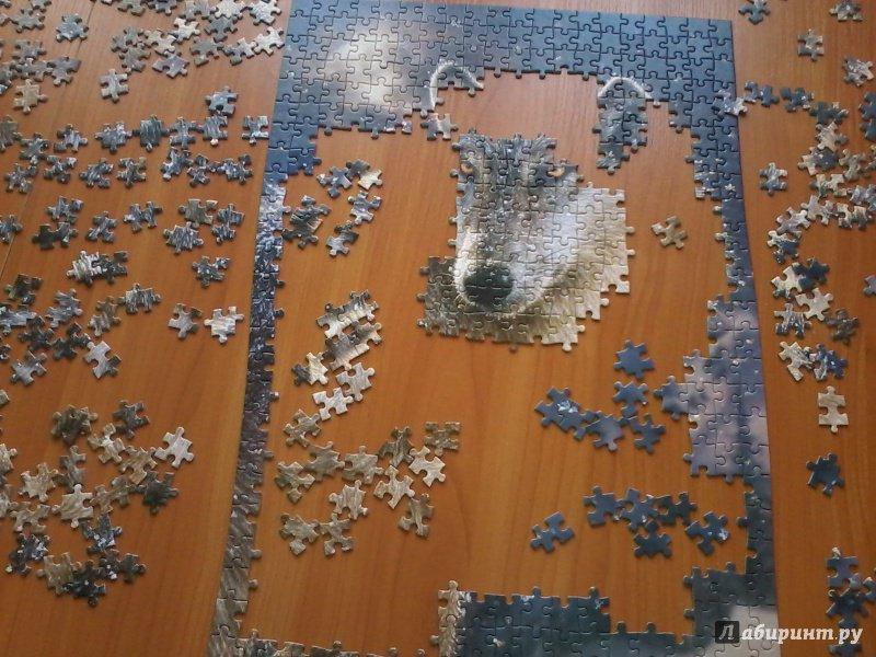 """Иллюстрация 11 из 11 для Puzzle-500 """"Волк"""" (B-52431)   Лабиринт - игрушки. Источник: Воздух"""