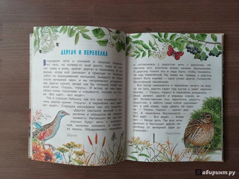 Иллюстрация 42 из 61 для Рассказы о природе - Михаил Пришвин   Лабиринт - книги. Источник: Гошева  Елена