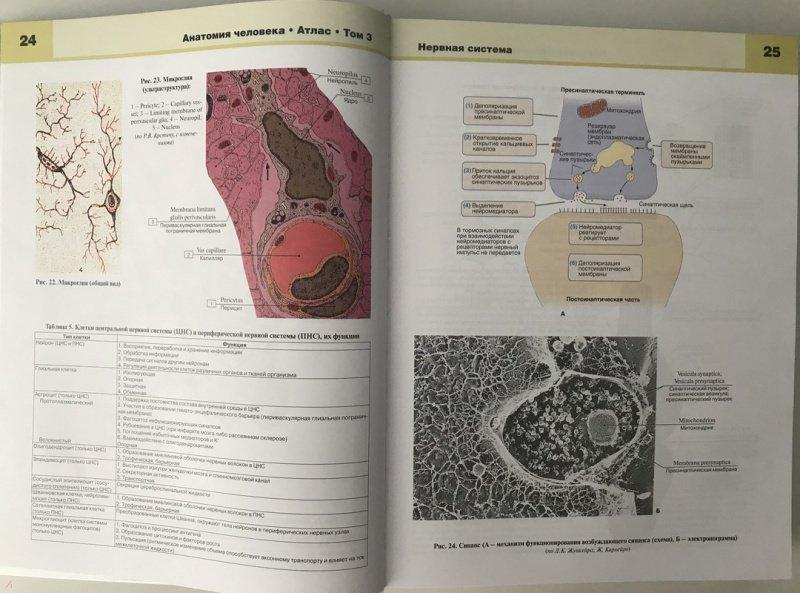 Иллюстрация 9 из 34 для Атлас анатомии человека. В 3-х томах. Том 3 - Билич, Крыжановский | Лабиринт - книги. Источник: Ромыдтчъ