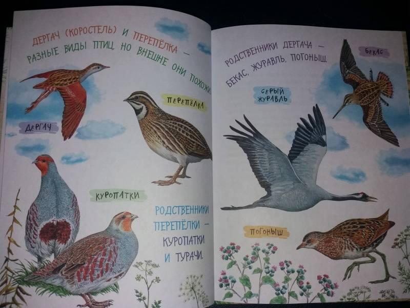 Иллюстрация 54 из 62 для Рассказы о природе - Михаил Пришвин | Лабиринт - книги. Источник: Лабиринт