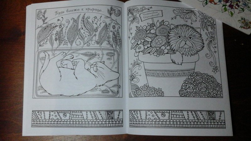 Иллюстрация 22 из 23 для Котомудрости. Раскраска для ...