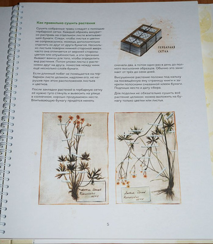 Иллюстрация 58 из 157 для Мой гербарий. Цветы и травы - Анна Васильева    Лабиринт - книги. eba020e5724