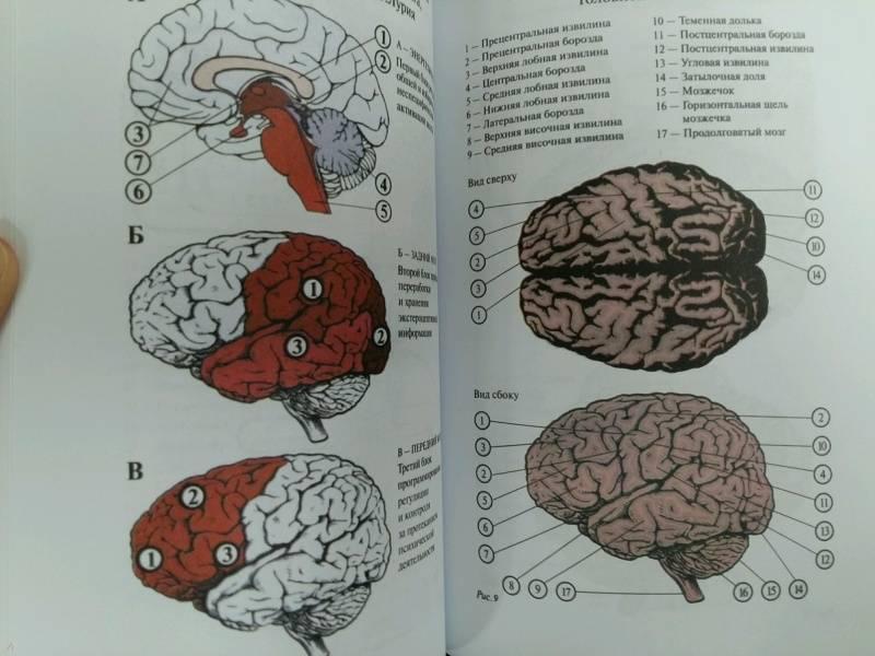 Иллюстрация 31 из 34 для Основы нейропсихологии. Учебник для ВУЗов - Татьяна Визель | Лабиринт - книги. Источник: L  Elena