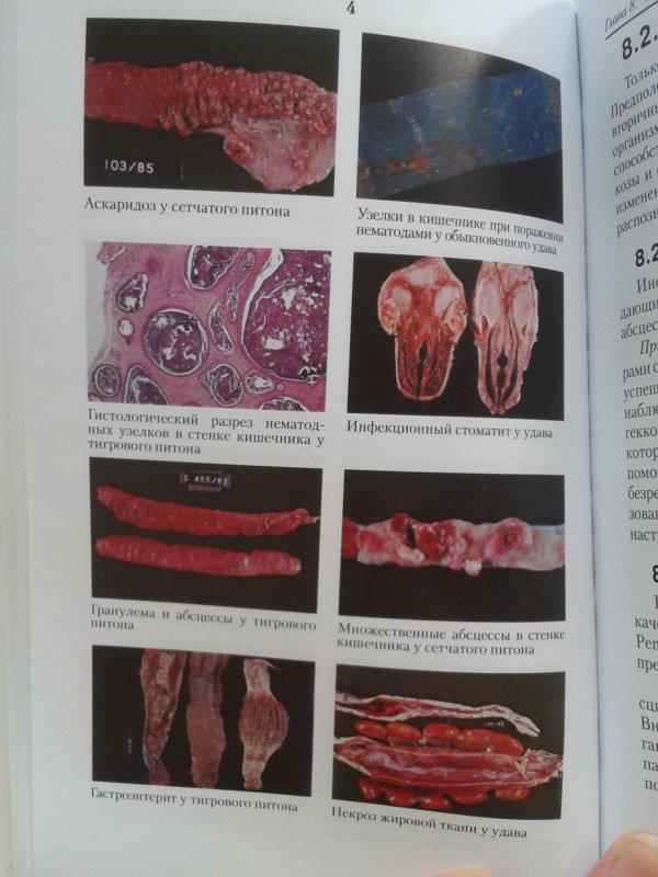Иллюстрация 13 из 16 для Рептилии. Болезни и лечение - Ярофке, Ланде | Лабиринт - книги. Источник: Лазаренко  Виктория
