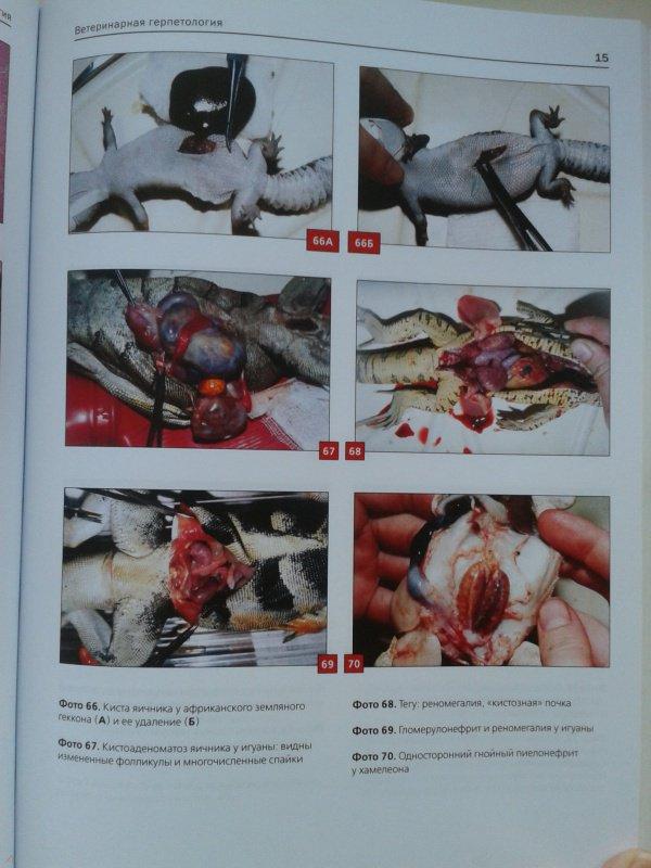 Иллюстрация 17 из 21 для Ветеринарная герпетология - Дмитрий Васильев | Лабиринт - книги. Источник: Лазаренко  Виктория