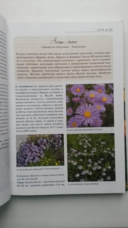 Иллюстрация 17 из 28 для Однолетние и многолетние декоративные растения. Иллюстрированный атлас - Дина Кудрявец | Лабиринт - книги. Источник: Весна