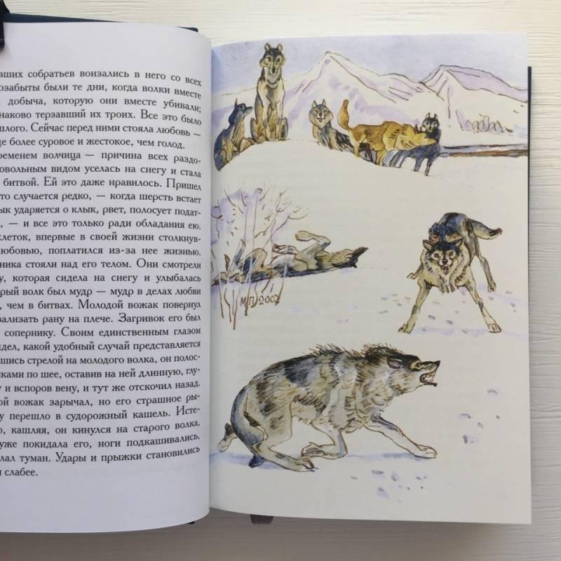Иллюстрация 46 из 51 для Белый Клык. Зов предков - Джек Лондон | Лабиринт - книги. Источник: Лабиринт