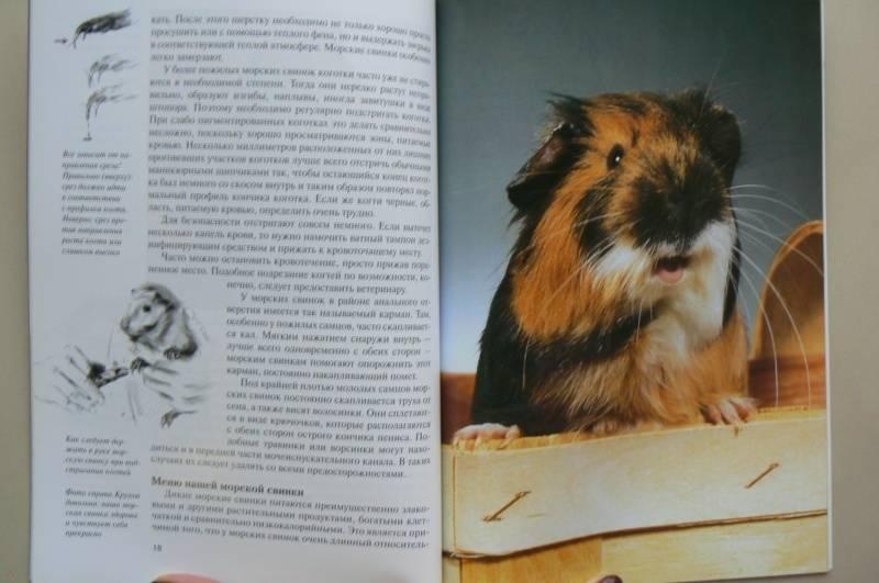 Иллюстрация 17 из 18 для Морские свинки. Содержание и уход - Дитрих Альтман   Лабиринт - книги. Источник: Лидия