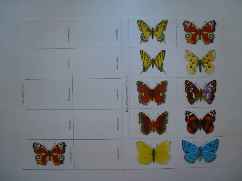 Иллюстрация 28 из 34 для Бабочки. Дидактический материал - Татьяна Куликовская | Лабиринт - книги. Источник: Knigolub_IA