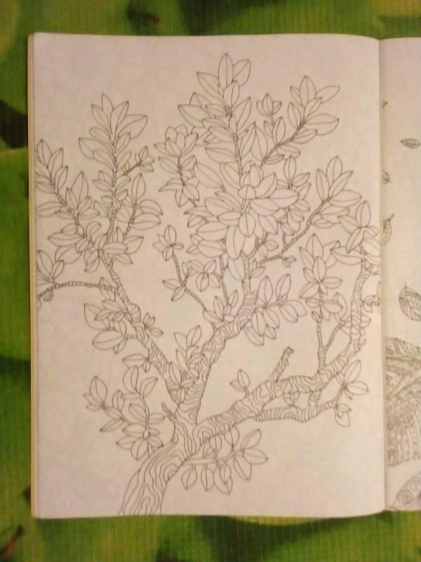 Иллюстрация 21 из 30 для Волшебный сад. Раскраска для ...