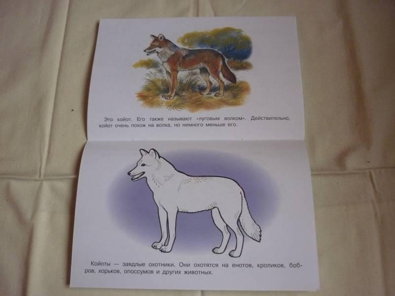 """Книга: """"Раскраска. Животные Америки и Австралии"""". Купить ..."""