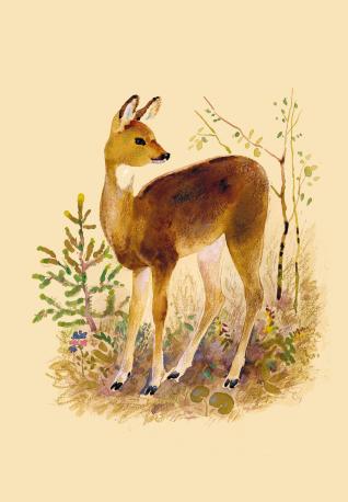 Анималия: самые важные книги о животных для детей