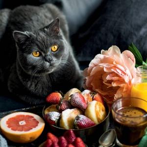 Модные кулинарные книги для осеннего меню