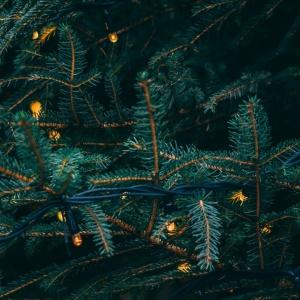 Рождественский бунт. Зимние книги для подростков