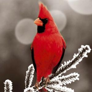 Живите в радости. Переиздан роман Фэнни Флэгг «Рождество и красный кардинал»
