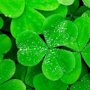 Неизвестная Ирландия: традиции и литература