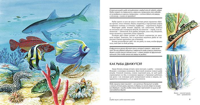 «Рыбы» Николая Сладкова