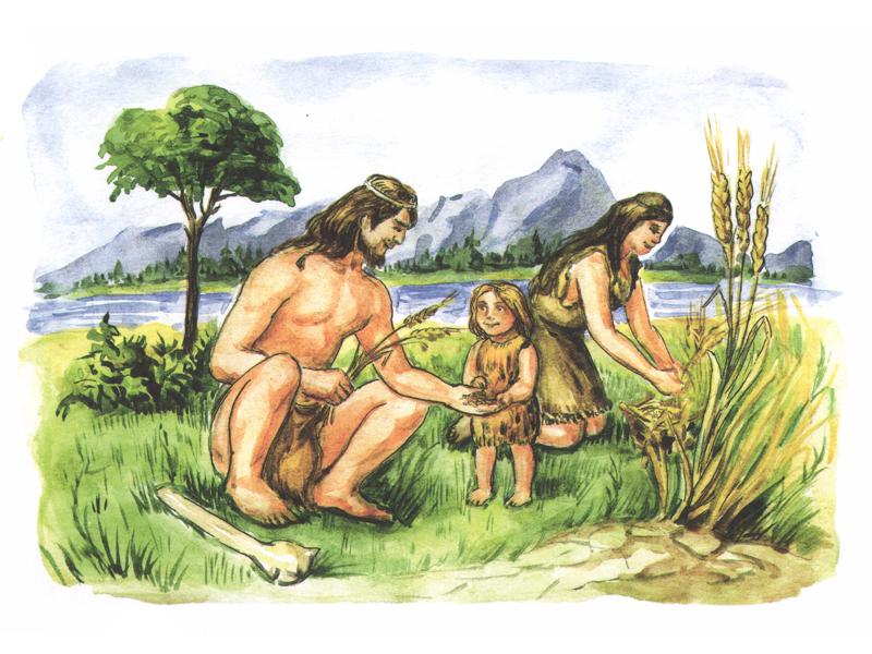 Картинки древние люди собирают растения