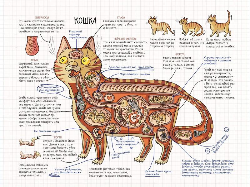 предупредить картинки что внутри кошки хотя ведущая