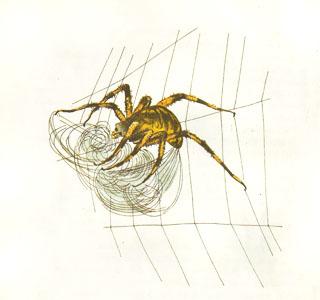 Иллюстрация по мотивам рисунков Гарта Уильямса к книге «Паутинка Шарлотты»