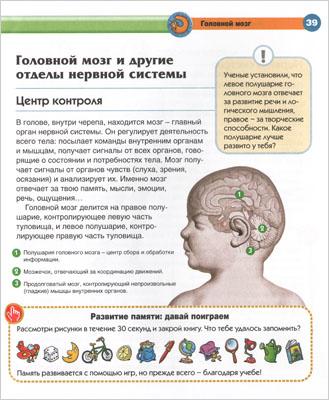 Головной мозг - иллюстрация из книги «Тело человека»