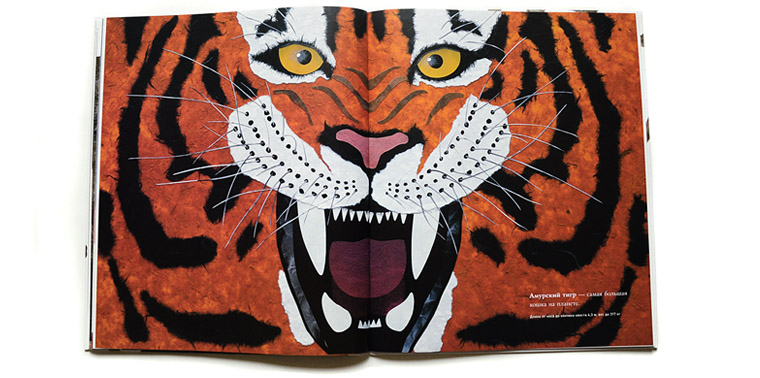 Тигр-иллюстрация Стива Дженкинса