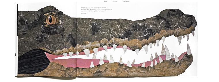 Крокодил-иллюстрация Стива Дженкинса