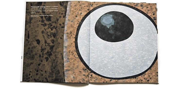 Глаз гигантского кальмара-иллюстрация Стива Дженкинса