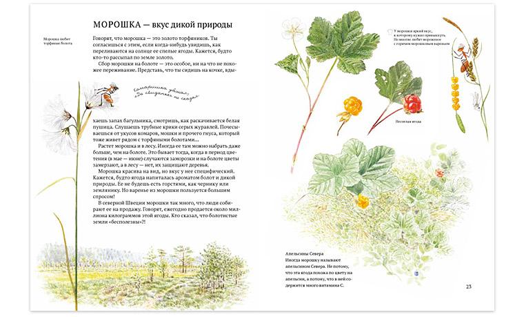 Иллюстрация из книги «Софи в мире ягод»