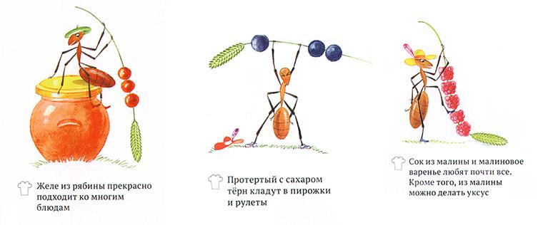 Иллюстрации из книги Софи в мире ягод»