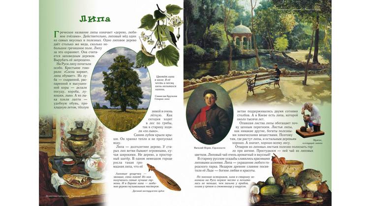 Иллюстрации из книги Сергея Махотина «Прогулки по лесу»