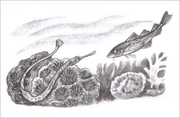 Иллюстрация Яны Хоревой к книге Улафа Кушерона «Приключения маленькой трески»