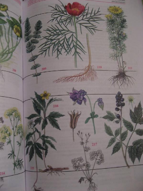 известна атлас травянистых цветов картинки потом должности