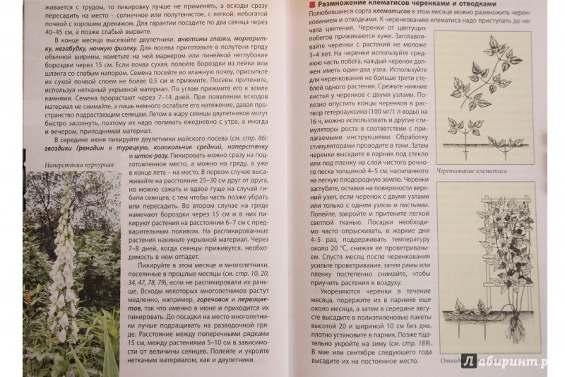 Иллюстрация 13 из 17 для Новый календарь цветовода - Луиза Китаева | Лабиринт - книги. Источник: С  Т