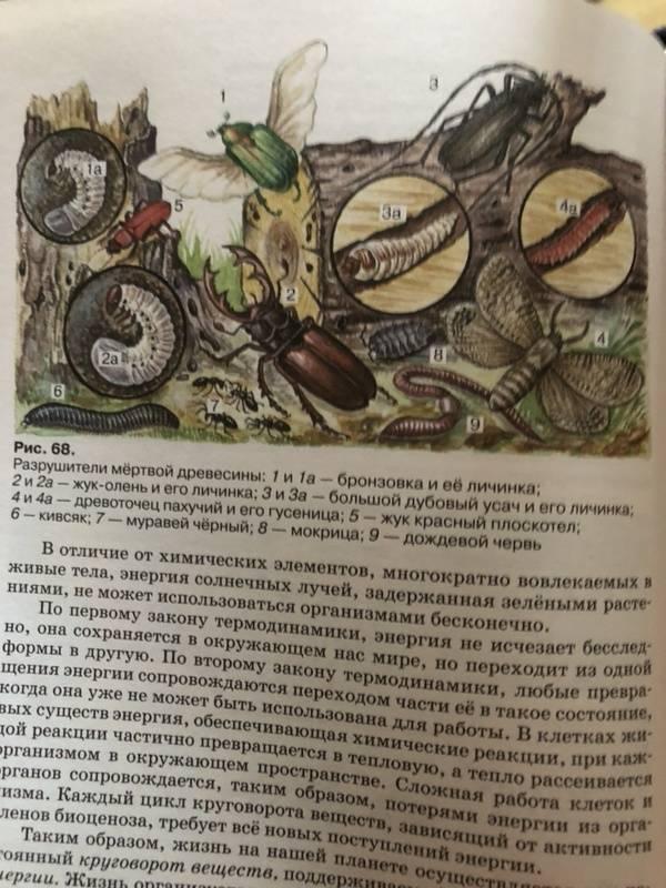 Иллюстрация 14 из 27 для Экология. 10-11 классы. Учебник. Вертикаль. ФГОС - Чернова, Константинов, Галушин   Лабиринт - книги. Источник: Марина