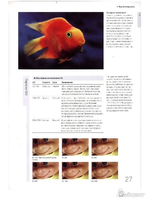 Иллюстрация 14 из 33 для Библия цифровой фотографии - Крис Джордж | Лабиринт - книги. Источник: Дочкин  Сергей Александрович