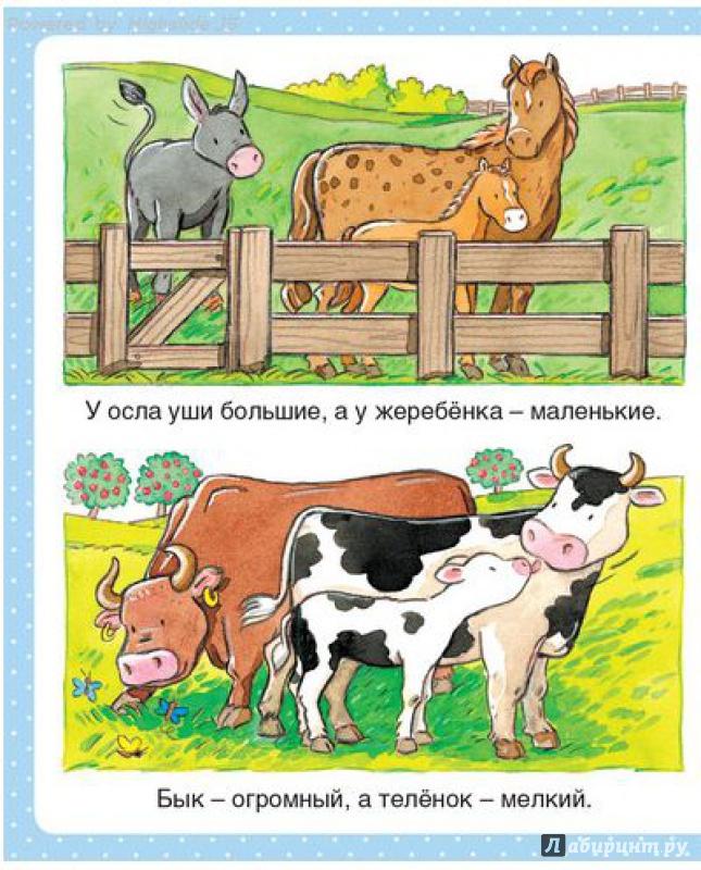 Бомон эмили животные в картинках