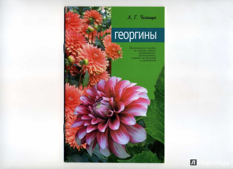 Иллюстрация 1 из 10 для Георгины - Анатолий Челищев   Лабиринт - книги. Источник: Ирина